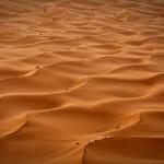 El desierto que ruge